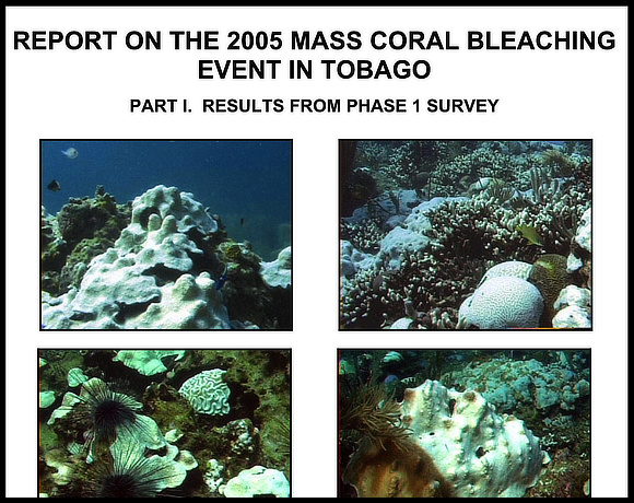 Download: Report on the 2005 Mass Coral Bleaching Event in Tobago – Results from Phase I Survey